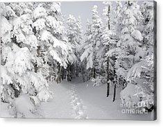 Mount Osceola Trail - White Mountains New Hampshire Acrylic Print
