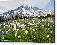 Acrylic Print featuring the photograph Mount Rainier And A Meadow Of Aster by Jeff Goulden