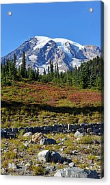 Mount Rainier Acrylic Print by Anthony Baatz