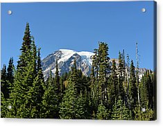 Mount Rainier Evergreens Acrylic Print by Anthony Baatz