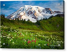Mount Rainier Flower Meadow Acrylic Print by Inge Johnsson