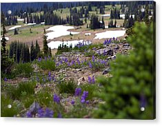 Acrylic Print featuring the photograph Mount Rainier Wildflowers by Bob Noble Photography