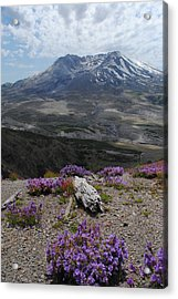 Mount Saint Helen's In Summer Acrylic Print