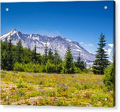Mount St. Helens Acrylic Print