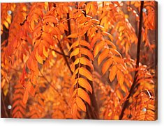 Mountain Ash Leaves - Autumn Acrylic Print by Jim Sauchyn
