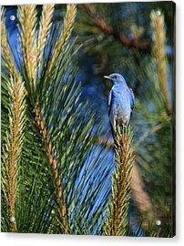 Mountain Blue Acrylic Print