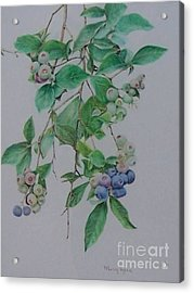 Acrylic Print featuring the drawing Mountain Blueberries by Mary Lynne Powers