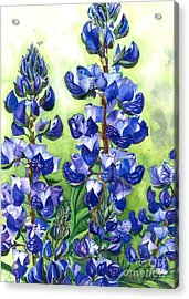 Acrylic Print featuring the painting Mountain Blues Lupine Study by Barbara Jewell