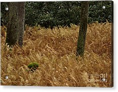 Acrylic Print featuring the photograph Mountain Carpet by Randy Bodkins