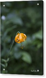 Mountain Flower Acrylic Print