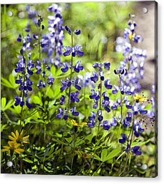 Acrylic Print featuring the photograph Mountain Flowers by Kjirsten Collier