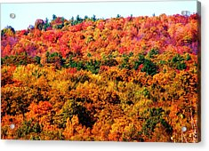 Mountain Foliage Series 015 Acrylic Print