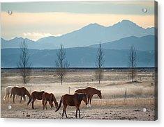 Wild Mountain Horses - Rocky Mountains Colorado Acrylic Print by Gregory Ballos