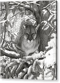 Mountain Lion Hideout Acrylic Print