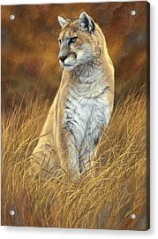 Mountain Lion Acrylic Print by Lucie Bilodeau