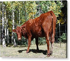 Acrylic Print featuring the photograph Mountain Moodaug by William Wyckoff
