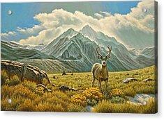 Mountain Muley Acrylic Print by Paul Krapf