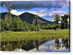 Mountain Pasture Acrylic Print