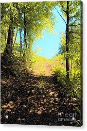Mountain Path Acrylic Print by Judy Via-Wolff