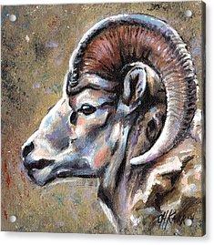 Mountain Sheep Acrylic Print by Christine Karron