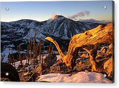 Acrylic Print featuring the photograph Mountain Snake by Peter Thoeny