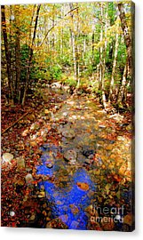Mountain Stream Covered With Fall Leaves Acrylic Print by Eunice Miller