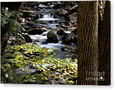 Soothing Mountain Stream In The Smoky's Acrylic Print