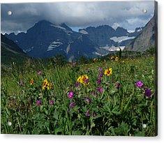 Mountain Wildflowers Acrylic Print by Alan Socolik
