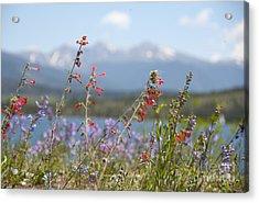 Mountain Wildflowers Acrylic Print