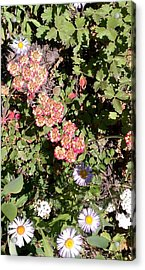 Acrylic Print featuring the photograph Mountain Wildflowers by Fortunate Findings Shirley Dickerson
