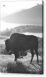 Mountain Wildlife Acrylic Print by Pixel  Chimp