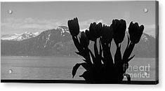 Mountains And Tulips Acrylic Print by Laura  Wong-Rose