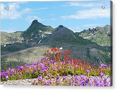 Mountains And Wildflowers Acrylic Print by Robert  Moss