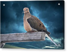 Acrylic Print featuring the photograph Mourning Dove Blue Sky by Marjorie Imbeau