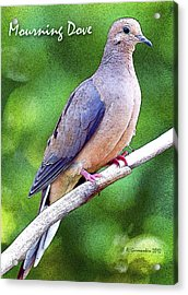 Acrylic Print featuring the photograph Mourning Dove Digital Art by A Gurmankin