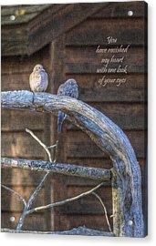 Mourning Doves Acrylic Print by Cheryl Birkhead