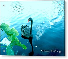 Mourning Swan Song Acrylic Print