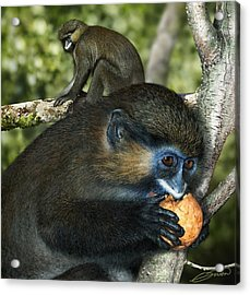 Moustached Guenon Acrylic Print by Owen Bell