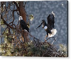 Move Over Acrylic Print by Mike Dawson