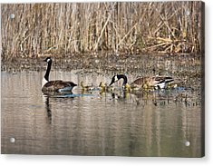 Moving Along Acrylic Print by Dale Kincaid