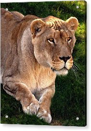 Moving In Painted Version Acrylic Print by Steve Harrington