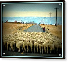 Acrylic Print featuring the photograph Moving Sheep by Heidi Manly