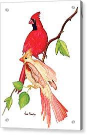 Mr. And Mrs. Cardinal Acrylic Print