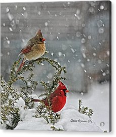 Mr. And Mrs. Cardinal Acrylic Print by Denise Romano