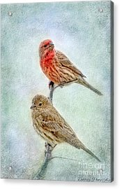 Mr And Mrs House Finch Digital Paint Acrylic Print by Debbie Portwood