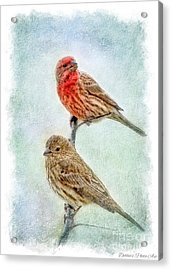 Mr And Mrs House Finch Digital Paint With Frame Acrylic Print by Debbie Portwood