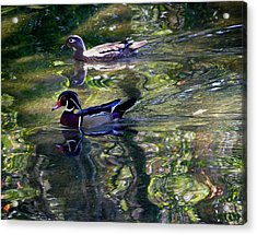 Mr And Mrs P W Duck Acrylic Print