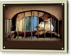 Mr. And Mrs Tweety In Sepia  Acrylic Print by Danielle  Parent