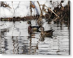 Mr. And Mrs. Wood Duck Acrylic Print by Jill Bell