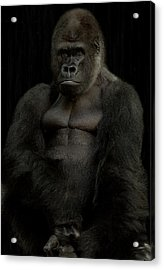 Mr. Big Acrylic Print by Christine Sponchia
